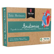 Lectii de anatomie: Organe de simt. Sistemul respirator. Sistemul circulator - Lectii Montessori