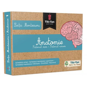 Lectii de Anatomie: Sistemul osos. Sistemul nervos - Lectii Montessori