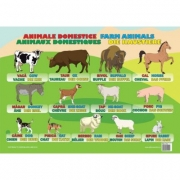 Animale Domestice - Plansa educativa
